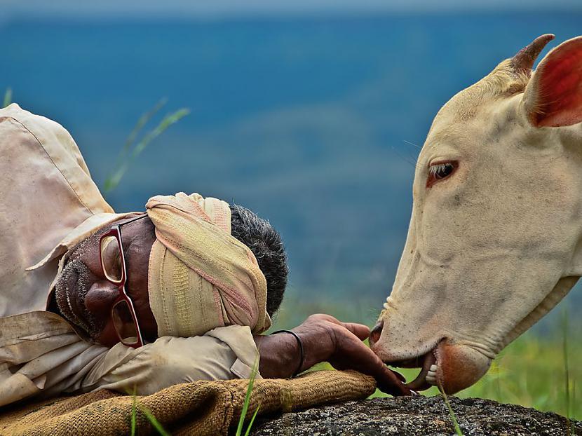 Autors: Fosilija National Geographic walpaperi tavam desktopam