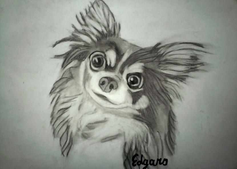 Chihuahua Autors: Edgarsnr1 Oriģināli zīmējumi