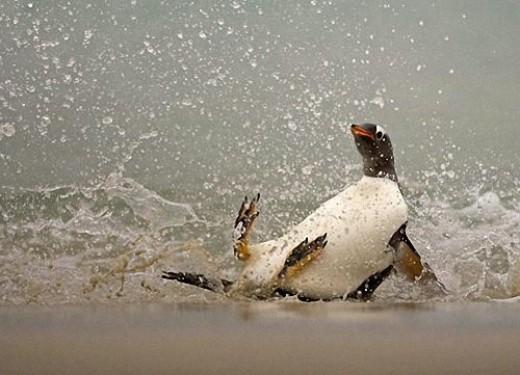 Antarktīdas pingvīni paslīdot... Autors: Fosilija Nedaudz dīvainie darbi...........