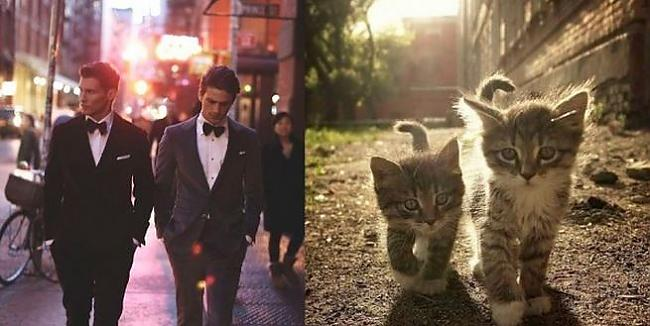 Autors: Kachiitis Šis vairāk meičām - kurš jums labāk patīk?! Kaķis vai puisis
