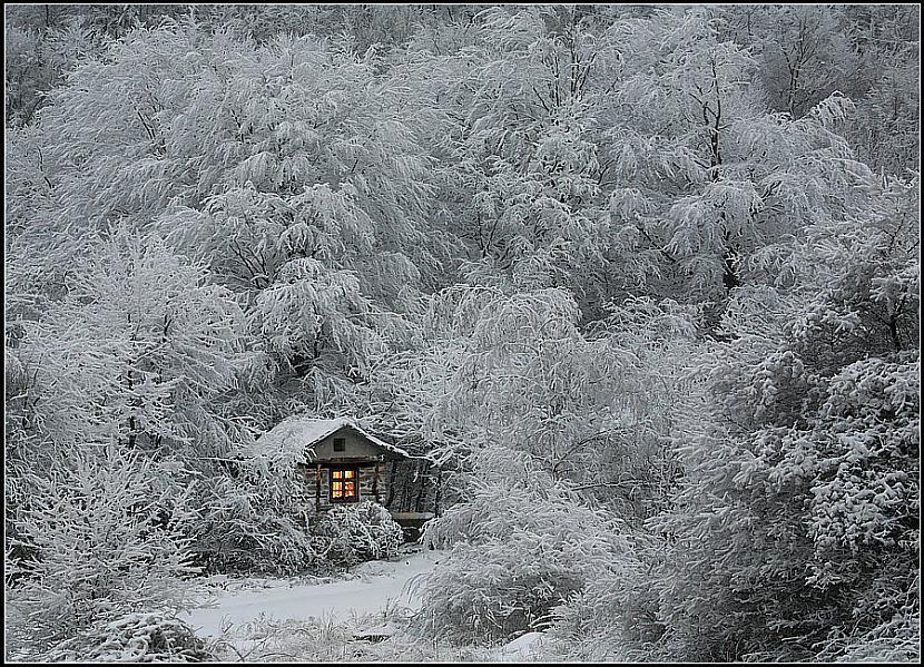 Aukstā laikā nagi aug ātrāk... Autors: Fosilija Daži interesanti fakti