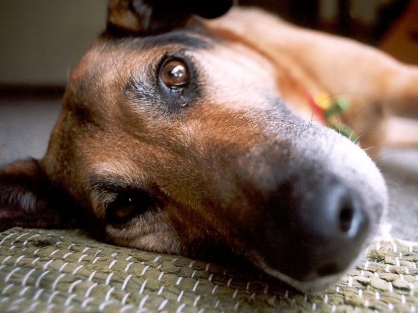 nbspnbspPirmo suni kosmosā kas... Autors: moncis15 Dažādi interesanti fakti! :)