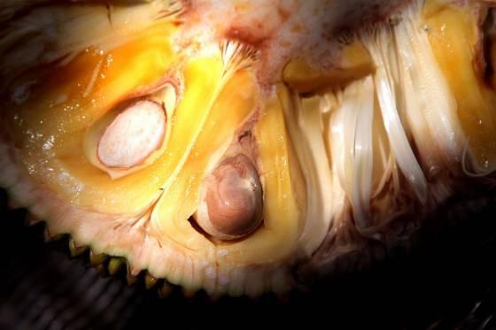 Džekfrūti  maizes auglis Tas... Autors: Deadshot 10 interesantāki augļi uz zemes