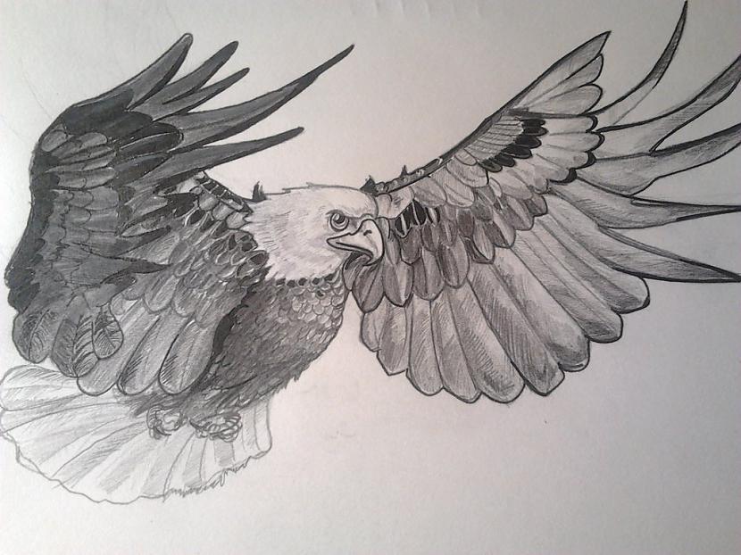 ērgļa skicenbsp Autors: ArtLine Hobijs