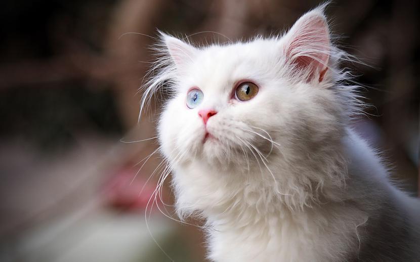 Noslēpums ir tajā ka kaķis ir... Autors: Raziels Par ko kaķi zina, bet nerunā