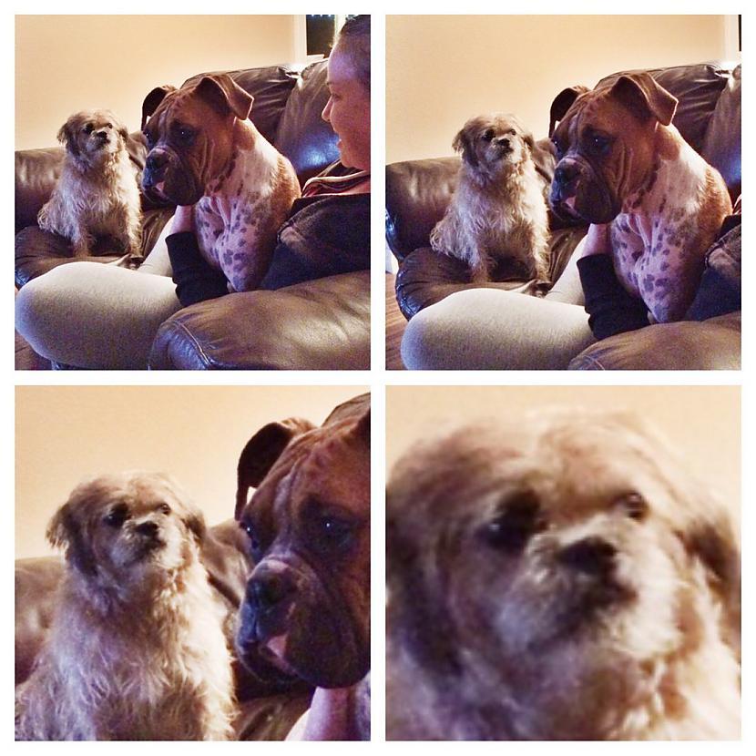 Autors: Fosilija Smieklīgi dzīvnieku foto.