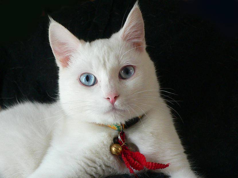 Esmu Pūciņa maza mīļa jauka... Autors: Fosilija Kaķu stāsti