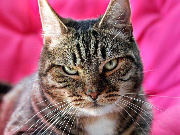 3 bdquoMana sliktā rīcība ir... Autors: kasītis no simpsoniem D Lietas, ko kaķi par sevi tev neatklās