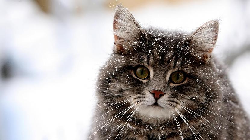 7 quotStarp citunbsp man... Autors: kasītis no simpsoniem D Lietas, ko kaķi par sevi tev neatklās
