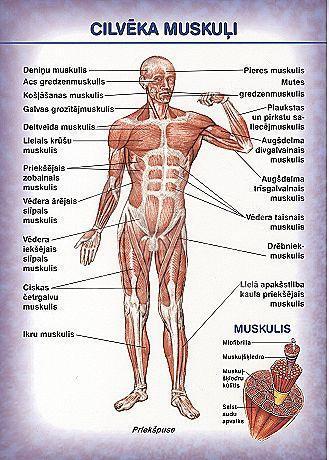 Produkti priekscaron muskuļiem... Autors: A3A3 30 paši bagātākie produkti priekš ķermeņa