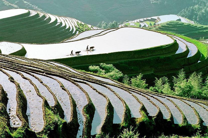 Ķīnas rīsu tīrumi Autors: AdriansLV 10. skaistākās vietas uz planētas