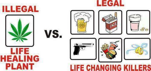 Lielākā daļa ir... Autors: BARAKA OBAMAKA Fakti par marihuānas lietošanu, 100% Patiesi