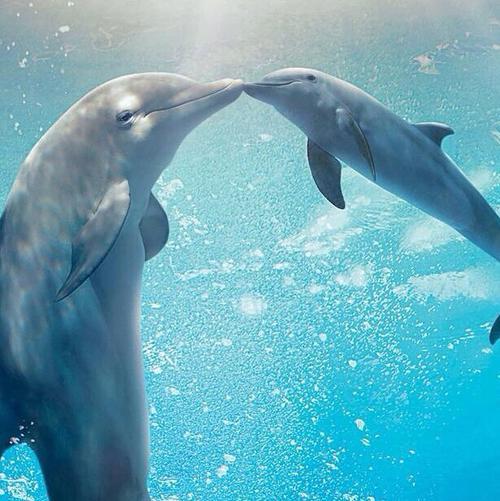 19 Delfīna smadzenes ir... Autors: kitucis123 Delfīni #Fakti . ♥