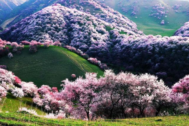 Yili Apricot Valley China Autors: im mad cuz u bad Kur vislabāk pavadīt Valentīndienu?