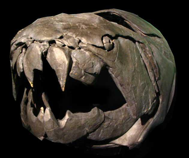 To zivi seviscaronķi briesmīgu... Autors: Gmonster Dunkleostus