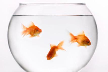 Zelta zivtiņām apaļie akvāriji... Autors: Sātans Fakti kuri būtu jāzina visiem ,bet kurus ne visi zin.
