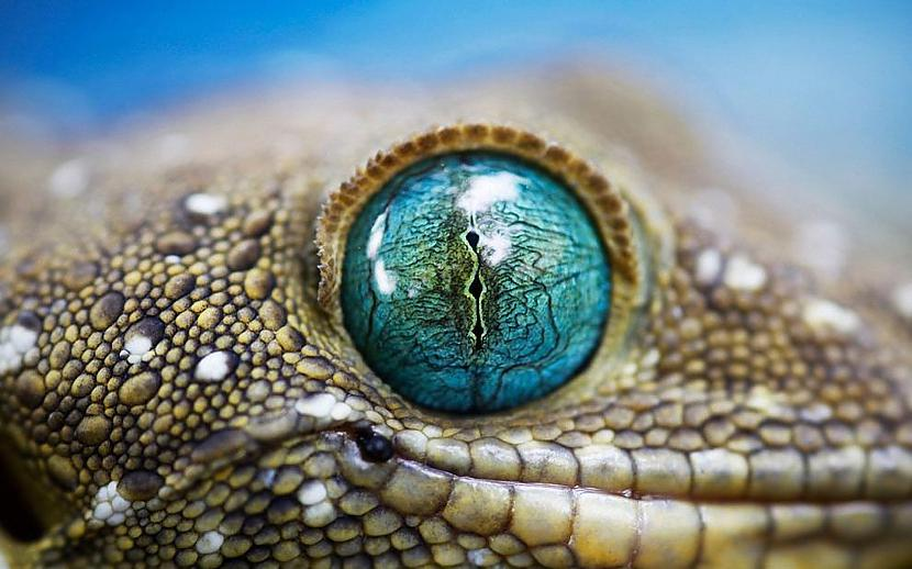 Čūskas acs Autors: Tourist Unikālās acis