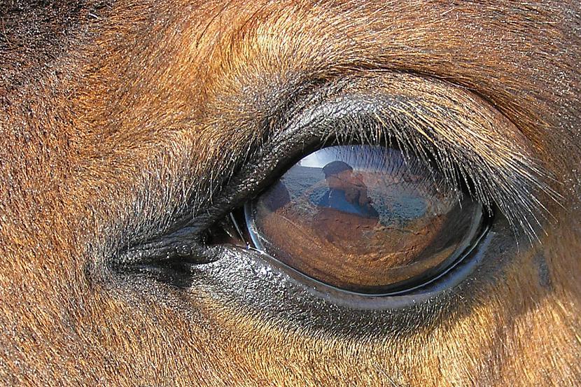 Zirga acs Autors: Tourist Unikālās acis