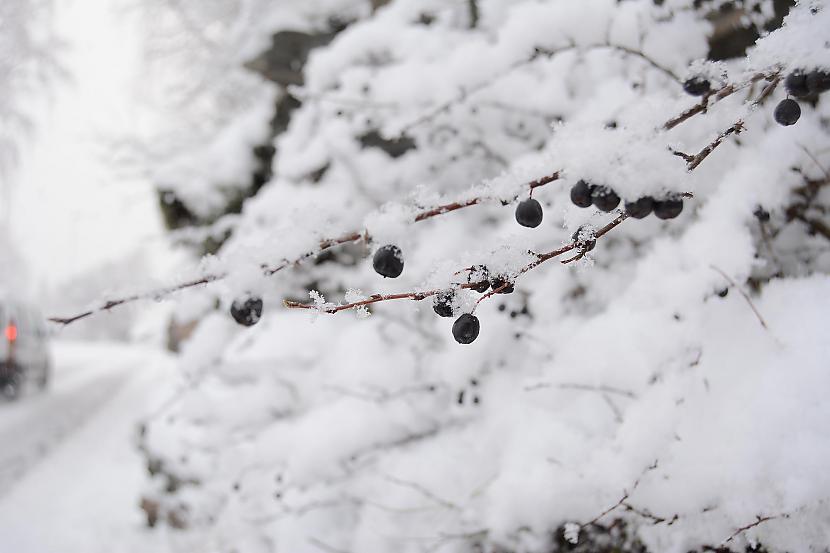 Sandane Norvēģija Autors: Fosilija Vai nu šādu ziemu, vai nekādu