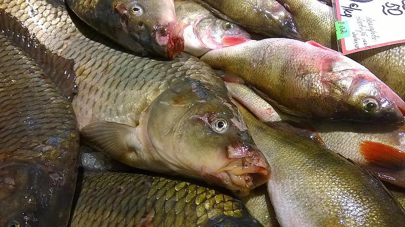Tad jau labāk lai tās zivis... Autors: Vampire Lord Turpinām šausmu stāstu (papildināts!!)