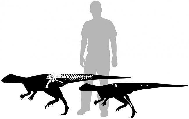 Daudzi cilvēki domā ka... Autors: Kapteinis Cerība Fakti par Dinozauriem 1. daļa.
