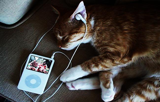 Tavas mīļākās dziesmas... Autors: Prāta Darbnīca Fakti par to, kā mūzika ietekmē tavas smadzenes