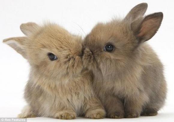 Skūpsta procesa zinātniskais... Autors: Cepuminsh002 Visneticamākie fakti
