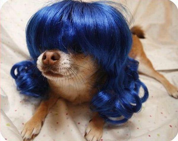 Autors: reinucitis Nu kā es izskatos?...
