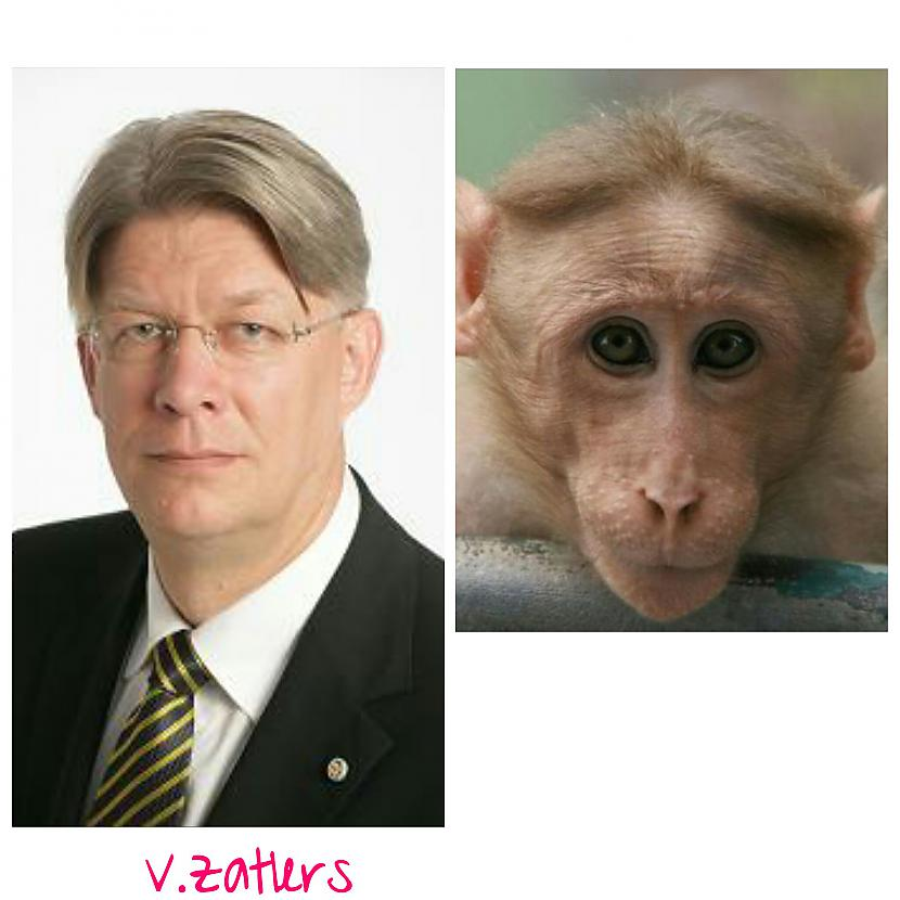 Valdis Zatlers  bijušais... Autors: ghost07 Latvijas politiķi vs pērtiķi (Līdzības)