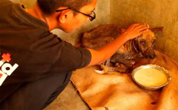 Pēc tam kad suns kārtīgi paēda... Autors: 3L3KTR1C0 Neticams stāsts par klaiņojošo suni, kuram bija briesmīga nieze