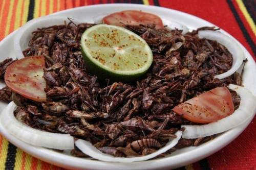 JumilesJumiles tautā... Autors: Alevender Dīvainākie ēdieni dažādās pasaules malās!