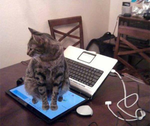 Kāds jauks dibena sildītājs Autors: twist Kaķu loģika.