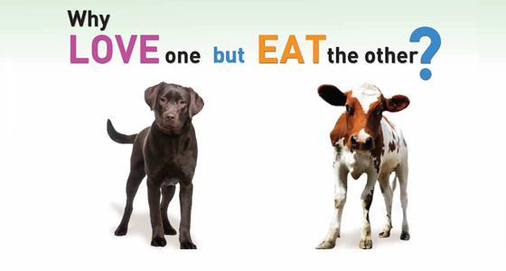 Ir sāpīgi redzēt kā musdienās... Autors: FoxRio WHO ziņojums - pārstrādāta gaļa palielina vēža risku.