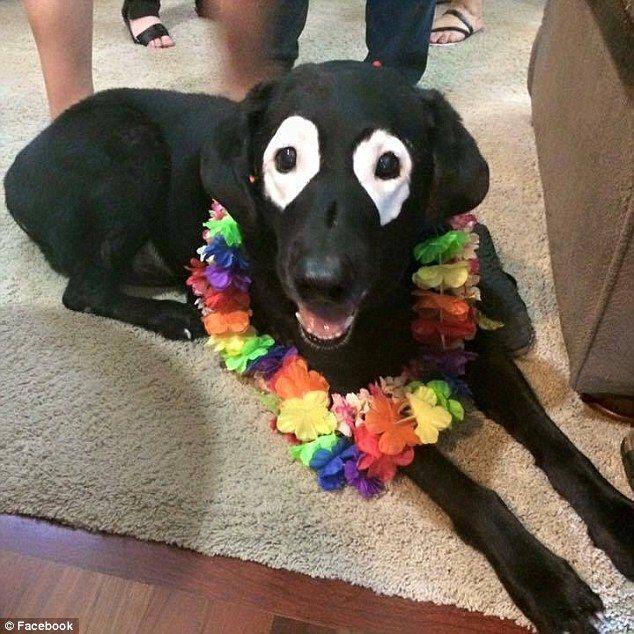 Visā savā 13 gadus ilgajā... Autors: zeminem Pandusuns: suns ar retu ādas slimību, kas liek līdzināties pandai.