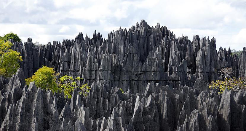 Klinscaronu mežs Madagaskarā... Autors: Sulīgais Mandarīns Skaistas un tajā pašā laikā bīstamas apskates vietas