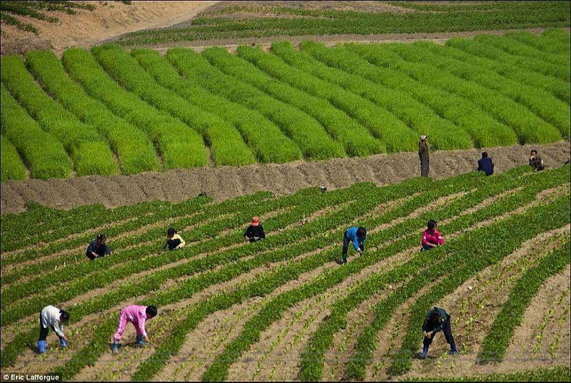 7 Kanibālisms Ziemeļkorejā no... Autors: WhatDoesTheFoxSay Patiesība par Ziemeļkoreju ?