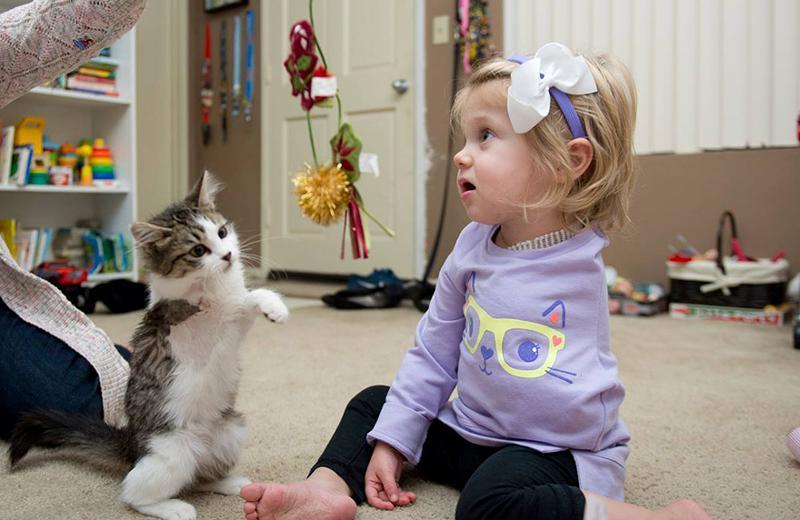 Kad mazajā Skārleta bija vien... Autors: matilde Meitenīte bez rokas un kaķēns bez ķepiņas atrada viens otru un ir nešķirami!