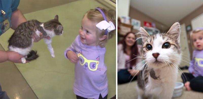 Mazais kaķēns savu ķepiņu... Autors: matilde Meitenīte bez rokas un kaķēns bez ķepiņas atrada viens otru un ir nešķirami!