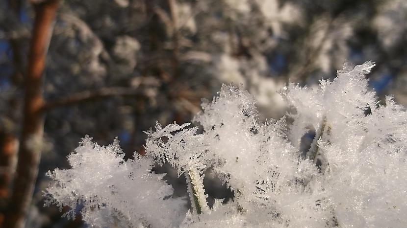Autors: Gufija My Pictures 3. daļa. (Winter)