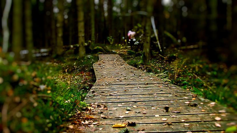 Mežā iekscaronā Autors: M4R3X Pazudušās un atrastās