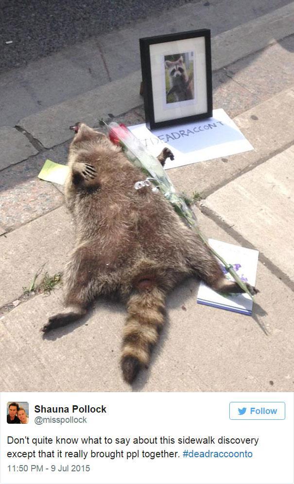 Autors: starmen Cilvēki ņirgājas par beigtu dzīvnieku