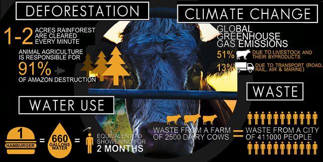 Kā pirmonbspiemeslu kāpēc mūs... Autors: FoxRio 5 iemesli, kāpēc vegānisms pazudīs.