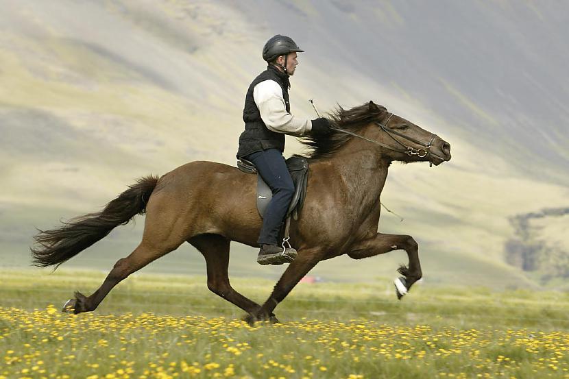 9 Zirgi nelieto cilvēkus kā... Autors: Planter Mind blowing facts #četri