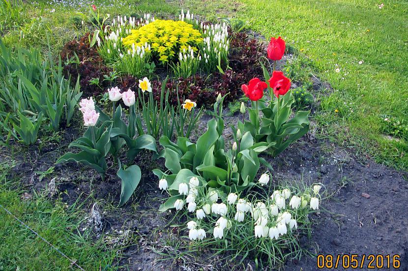 Jau daba atkal ziedu... Autors: rasiks Ko darītu Tu?