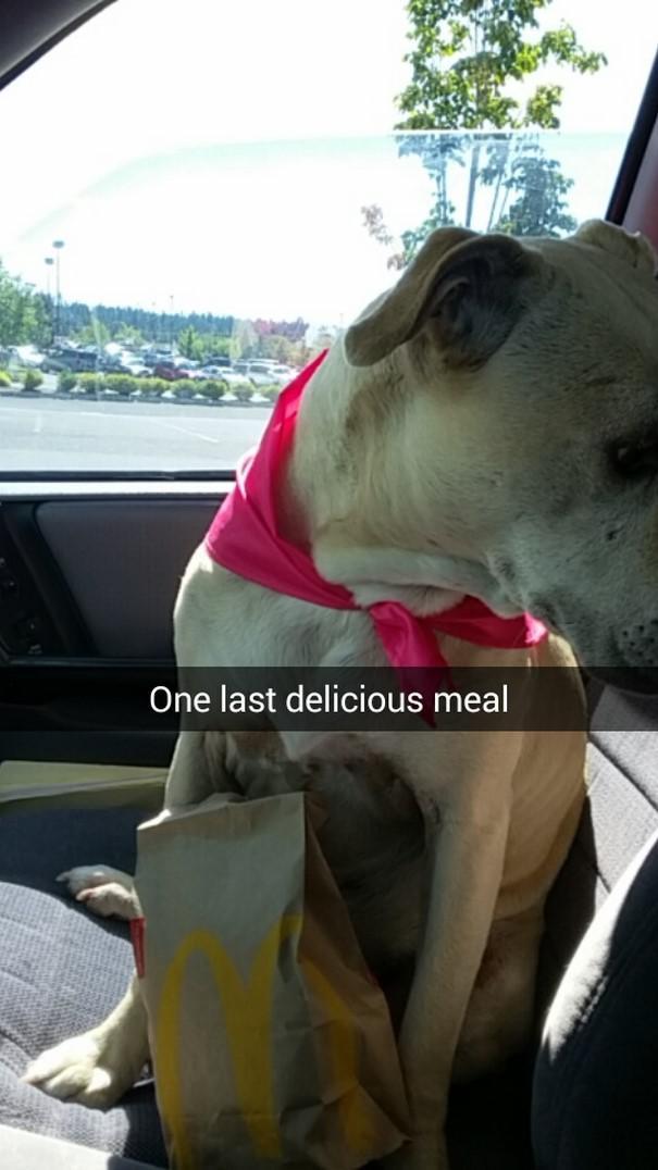 Pēdējā gardā maltīte Autors: matilde Šī sieviete iemūžināja sava mirstošā suņa pēdējo dienu