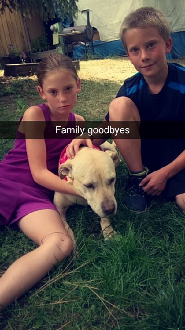 Ģimenes atvadas Autors: matilde Šī sieviete iemūžināja sava mirstošā suņa pēdējo dienu