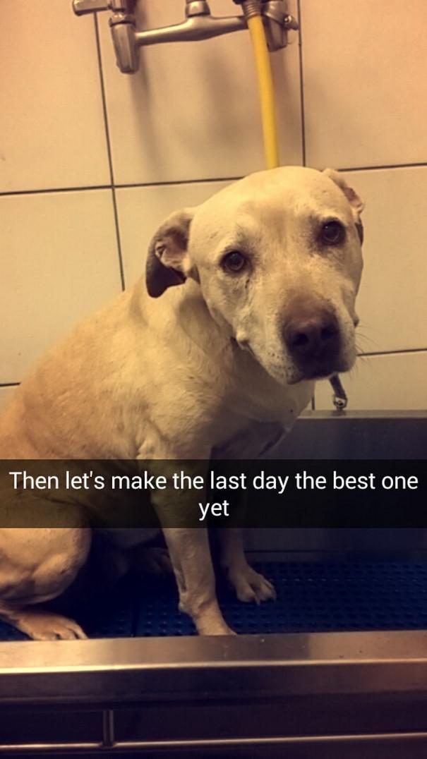 Tad padarīsim pēdējo dienu par... Autors: matilde Šī sieviete iemūžināja sava mirstošā suņa pēdējo dienu