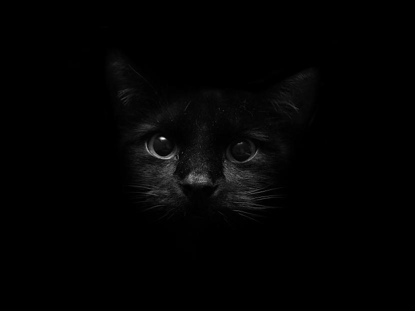 Autors: Dzoker 1920x1200p Full HD Wallpaper pack - Cat Edition