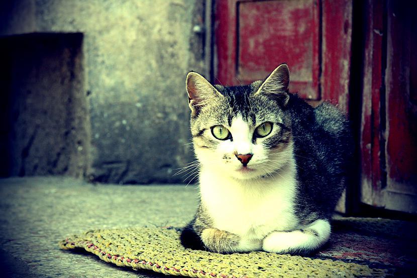 Autors: Dzoker 1920x1200p Full HD Wallpaper pack - Cat Edition