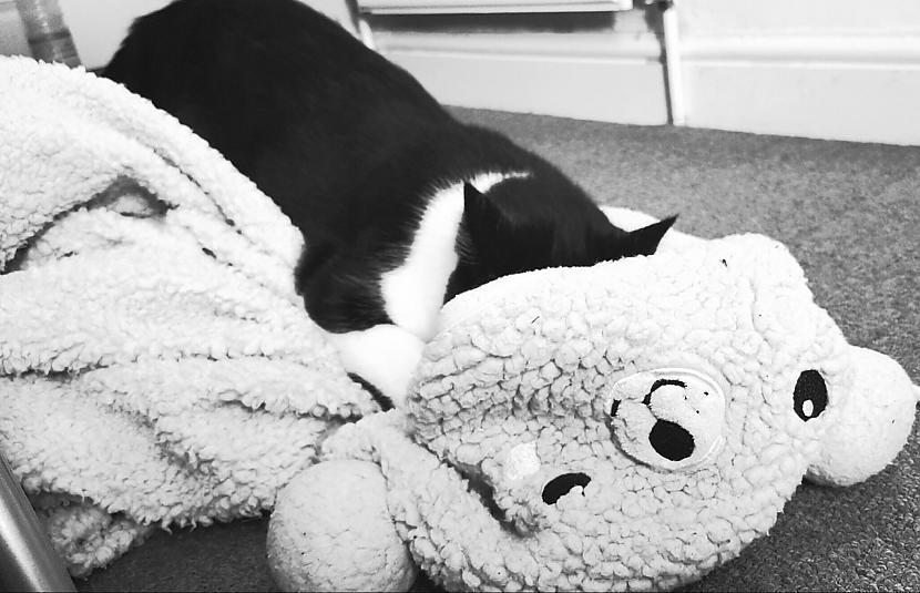 Trying to get some rest from... Autors: kristen Two happy UK cats